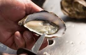 Sydney oyster shucking techniques